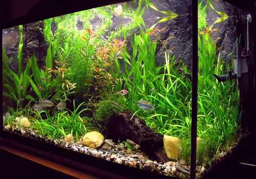 Saint Louis Aquarium Maintenance Planted Aquarium