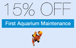 15% Off Fish Tank Maintenance For Your Home Or Business In The Saint Louis Area