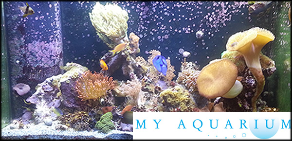 Regular Updates on Saint Louis Absolute Aquariums Own Aquarium
